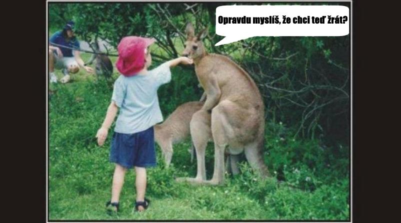 vtipný obrázek klokan